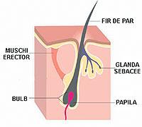 cresterea parului firul de par