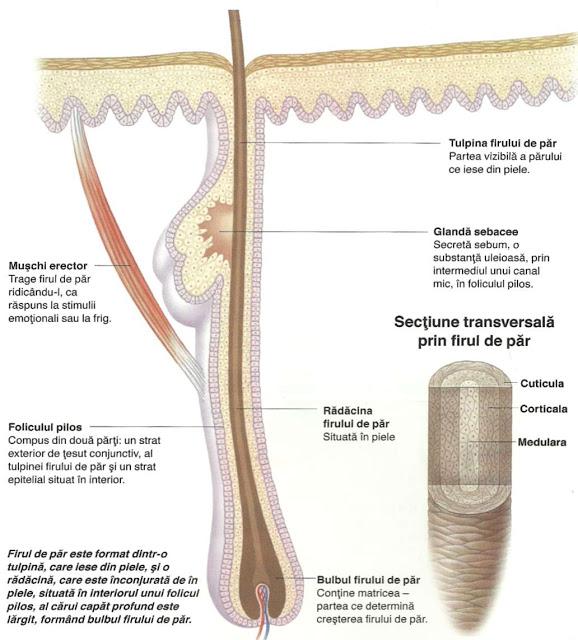 parul cresterea parului